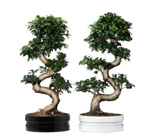 Ikea Bonsai